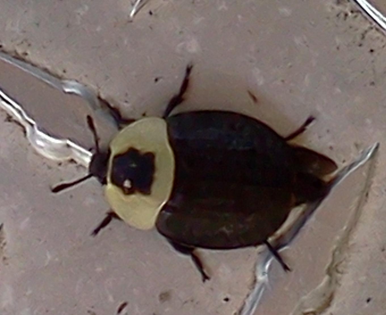 Neat Bug Lorain County Metro Parks