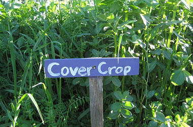 Planting cover crops a head start towards spring lorain - Cover crops for vegetable gardens ...