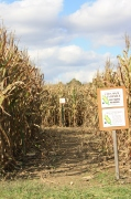 Try your hand at our 6 acre corn maze! Tickets $1.