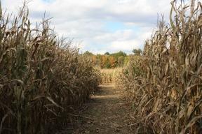 Fall Haywagon Rides and Corn Maze 2012 photos 017