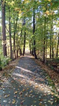 green-line-walk