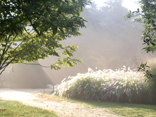 Summer morning with the grasses.jpg